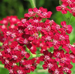 https://www.deguate.com/artman/uploads/32/flores.jpg