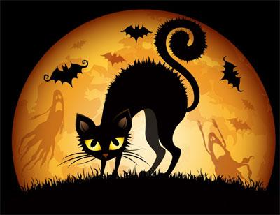 Gato Negro Halloween