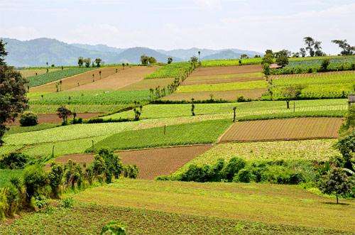 Campos de cultivo en Chimaltenango, Guatemala