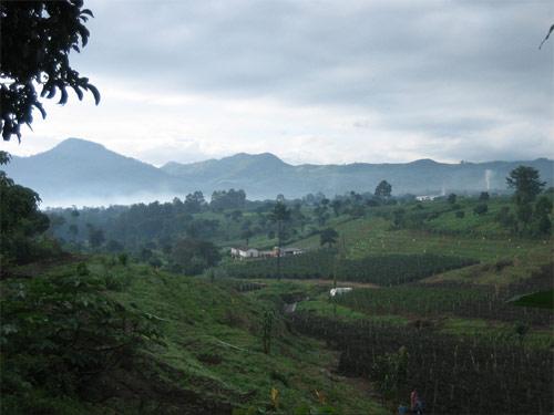 Fincas en San Andrés Itzapa, Chimaltenango