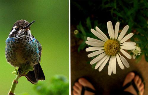 Flora y fauna en Santa Apolonia, Chimaltenango
