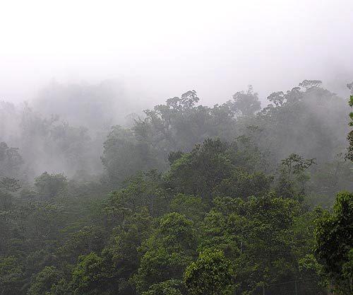 https://www.deguate.com/artman/uploads/39/RQuetzal-bosque.jpg