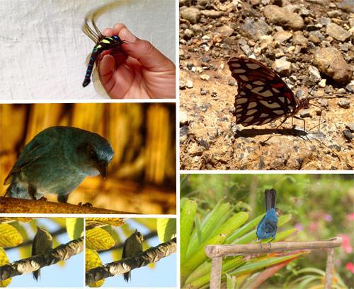 https://www.deguate.com/artman/uploads/39/RQuetzal-fauna.jpg