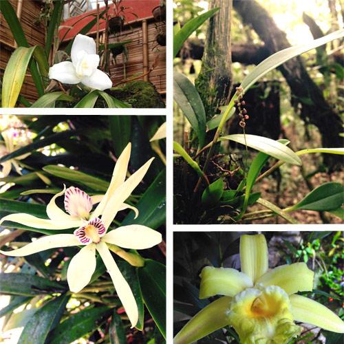 https://www.deguate.com/artman/uploads/39/RQuetzal-flora.jpg