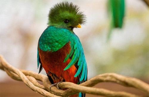 https://www.deguate.com/artman/uploads/39/RQuetzal-quetzal.jpg
