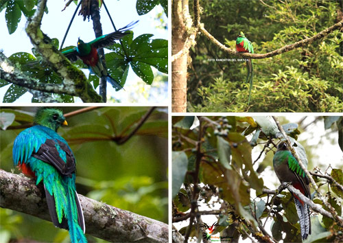 https://www.deguate.com/artman/uploads/39/RQuetzal-quetzal4.jpg