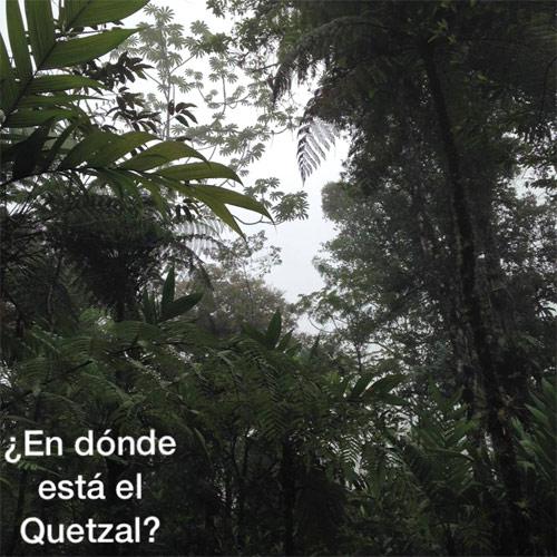 https://www.deguate.com/artman/uploads/39/RQuetzal-quetzalfindit.jpg