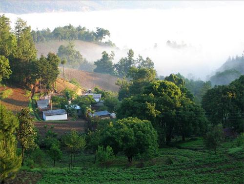 Vegetación en Santa Apolonia, Chimaltenango