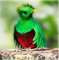 El Quetzal Deguate Com