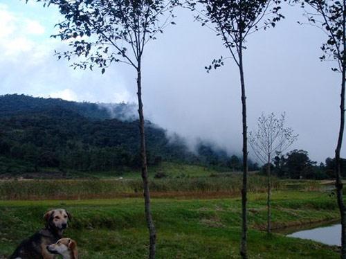 Finca Chichoy, Aldea Agua Escondida, Tecpán, Chimaltenango, Guatemala