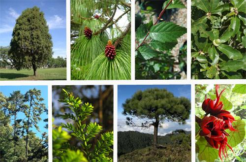 Diversidad de especies vegetales en Finca Chichoy, Tecpán, Chimaltenango