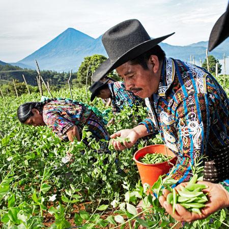 Vegetales Mayas para el mundo