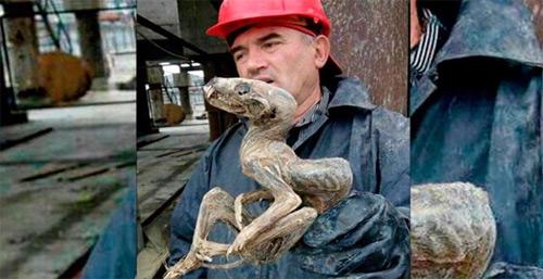 Hallan un extraño monstruo momificado en Siberia.