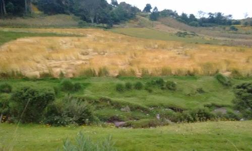 Campos de Pachute