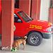 Bomberos Voluntarios de Cobán alimentan a los perros sin dueño.