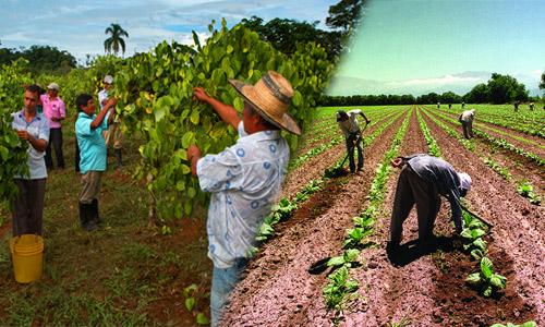 Generación de empleo rural en Guatemala