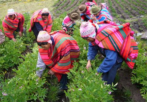 Surgimiento del mozo colono en Guatemala