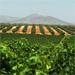 La política agraria liberal en Guatemala