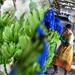 Plantaciones bananeras