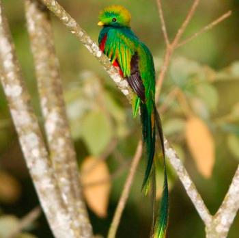 http://www.deguate.com/artman/uploads/53/Quetzal-2.jpg
