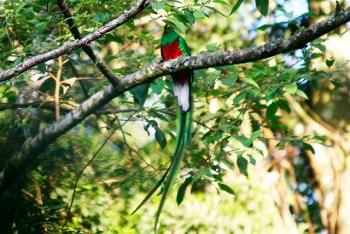 http://www.deguate.com/artman/uploads/53/Quetzal-3.jpg