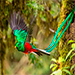 Lugares para conocer el Quetzal.