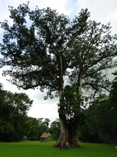 Ceiba 30 metros - Quirigua, Guatemala