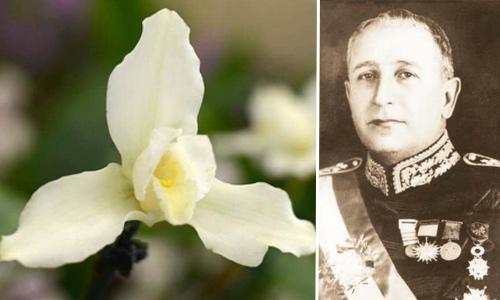 Monja Blanca, flor nacional de Guatemala desde 1934