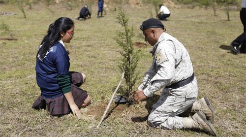 PNC inicia siembra de 26 mil árboles a nivel nacional