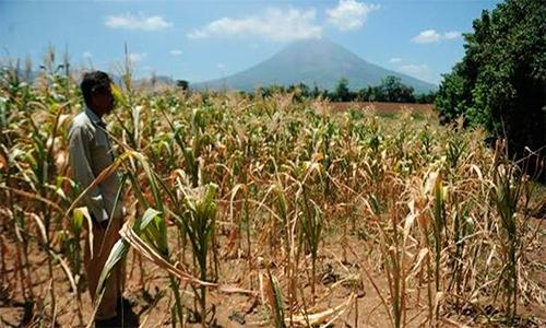 Cupones familiares es la solución del Gobierno por la sequía.