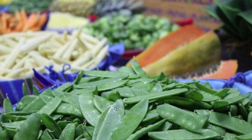 Exportadores piden a presidenciables 2019 planes para atender al sector agrícola