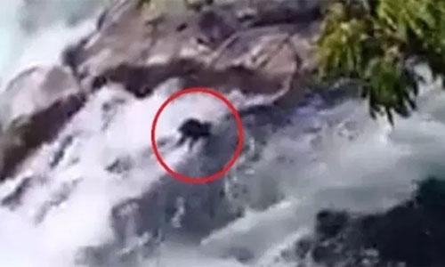 Hombre lanza a dos perritos a un río y mueren ahogados.