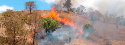 Combaten una docena de incendios forestales en las últimas 24 horas