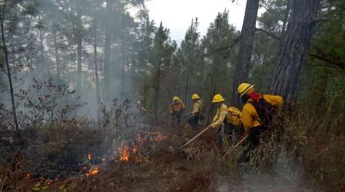 Los 364 incendios han consumido 490 hectáreas de bosques y pastizales