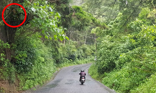 Cuatachicas camino a Santa Elena Barillas Amatitlan Guatemala